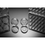24 Well Glass Bottom Cell Culture Plate, 10mm,TC, sterile 1/pk, 10/cs